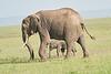 Elephant_Asilia_2018_Mara__0193