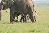 Elephant_Asilia_2018_Mara__0181