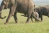 Elephant_Asilia_2018_Mara__0182