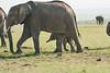 Elephant_Asilia_2018_Mara__0174