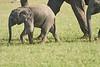Elephant_Asilia_2018_Mara__0169