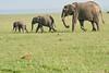 Elephant_Asilia_2018_Mara__0171