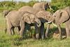 Elephant_Asilia_2018_Mara__0153