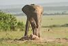 Elephant_Asilia_2018_Mara__0168