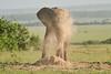 Elephant_Asilia_2018_Mara__0166