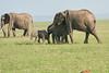 Elephant_Asilia_2018_Mara__0173