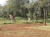 Giraffe_Manor_2018_Nairobi__0174