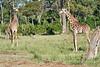 Giraffe_Mara_2018__0008