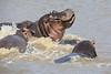 Hippo_Action_2018_Mara__0007