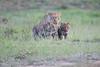 Leopard_Cubs_Mara_2018_Asilia__0070