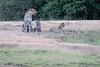 Leopard_Cubs_Mara_2018_Asilia__0118