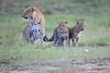 Leopard_Cubs_Mara_2018_Asilia__0075