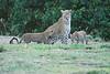 Leopard_Cubs_Mara_2018_Asilia__0262