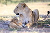 Lion_Cub_And_ Mom_Asilia_2018_Mara__0005