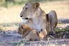 Lion_Cub_And_ Mom_Asilia_2018_Mara__0023
