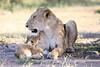Lion_Cub_And_ Mom_Asilia_2018_Mara__0006