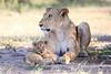 Lion_Cub_And_ Mom_Asilia_2018_Mara__0001