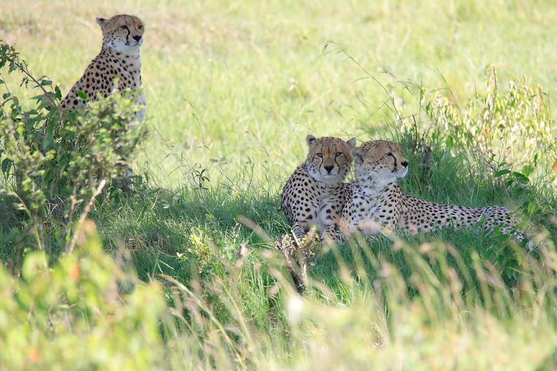 Cheetah_Asilia_2018_Mara__0006