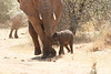 Tiny_Elephant_Loisaba_2018_0009