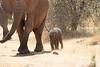 Tiny_Elephant_Loisaba_2018_0013