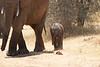 Tiny_Elephant_Loisaba_2018_0018
