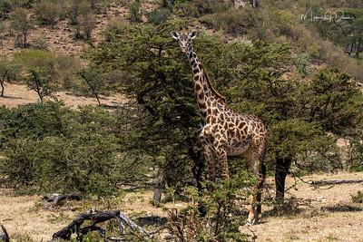 Africa-249
