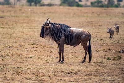 Africa-383