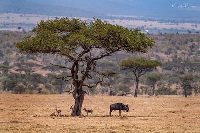 Africa-339