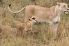 African_Safari_Book_ (213)