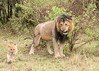 African_Safari_Book_ (216)