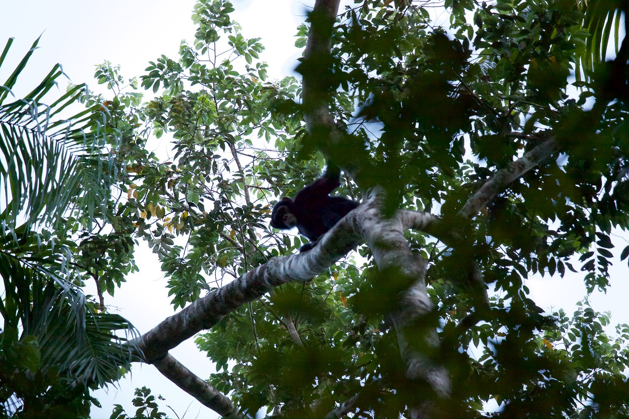 We walked in the dark and waited for Chimpanees to wake up and come down from their nests