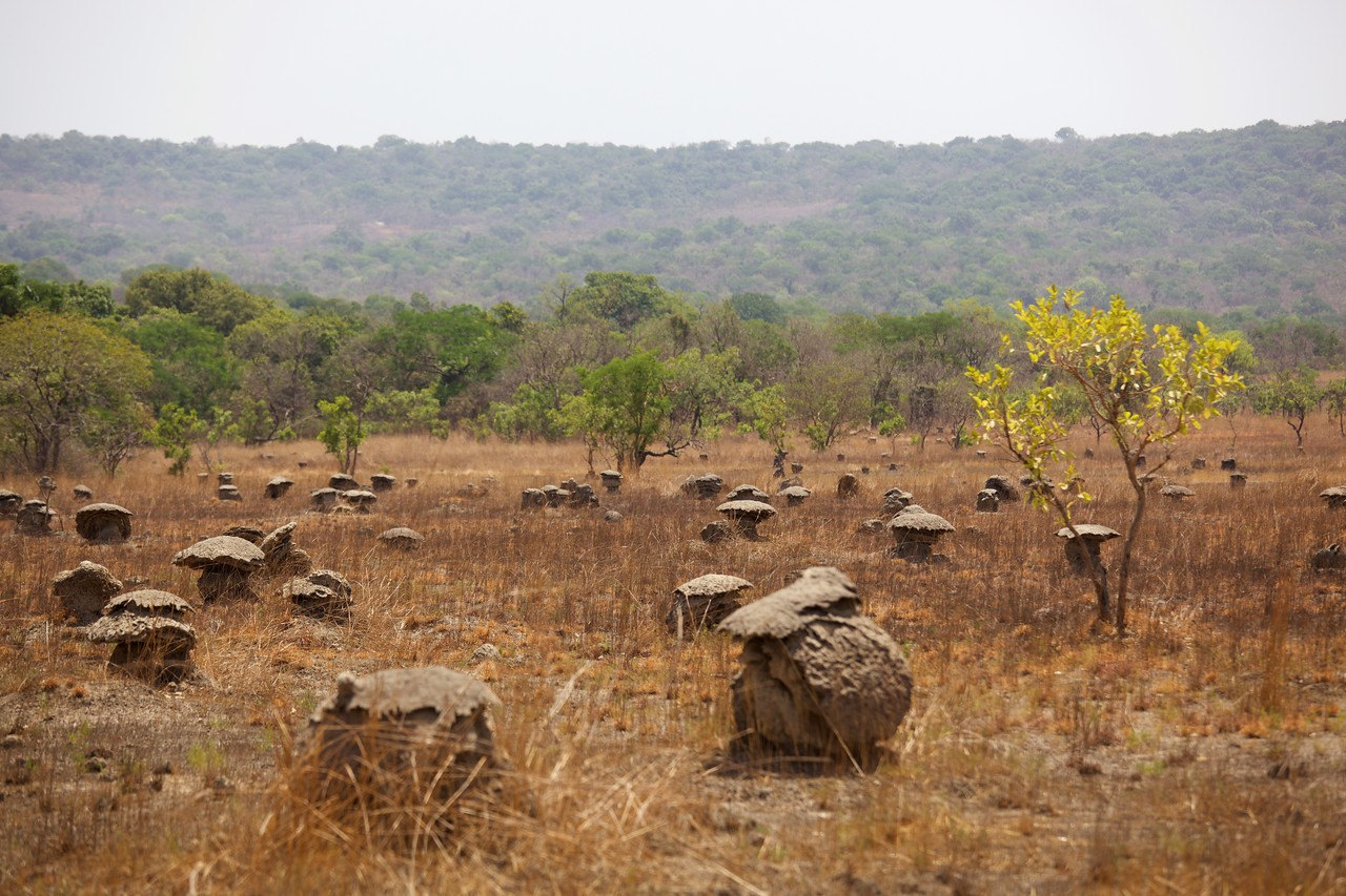 Termite mounds in Boe National Park