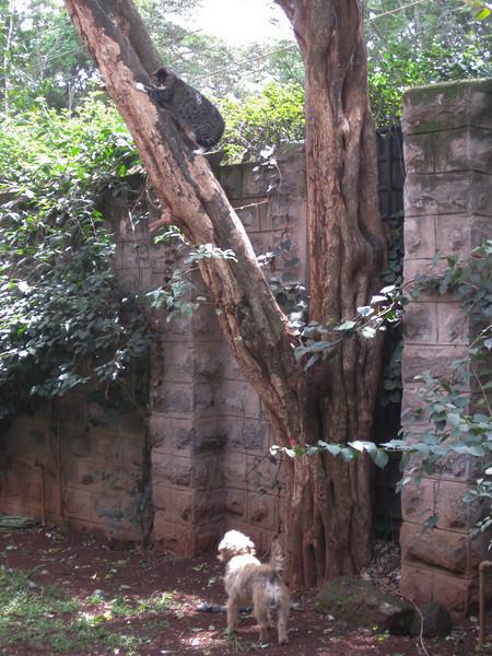 Who knew fatty could climb trees!