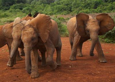 David Sheldrick Elephant Orphange