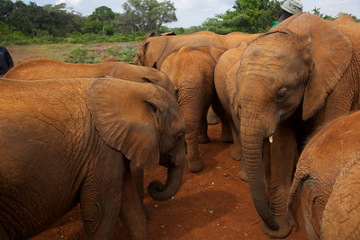 We managed to arrange a private feeding with the elephants