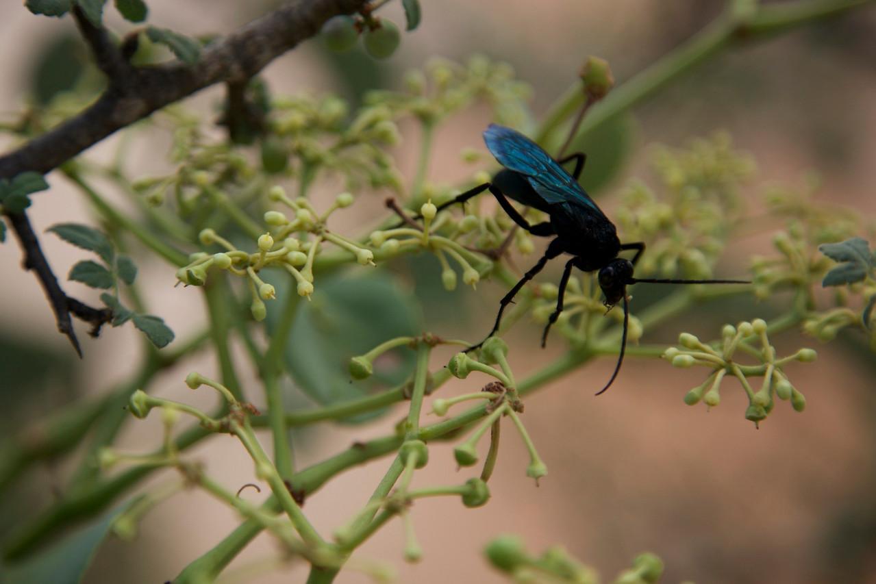 Big yucky bug!