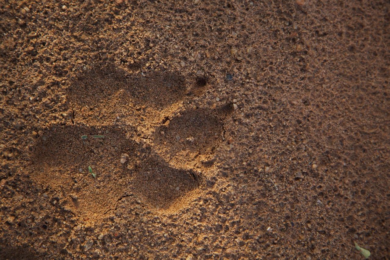 Tracking hyenna