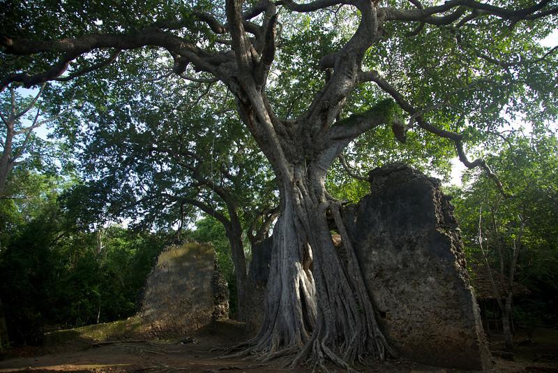 Gede Ruins - 13th century Swahili coast town