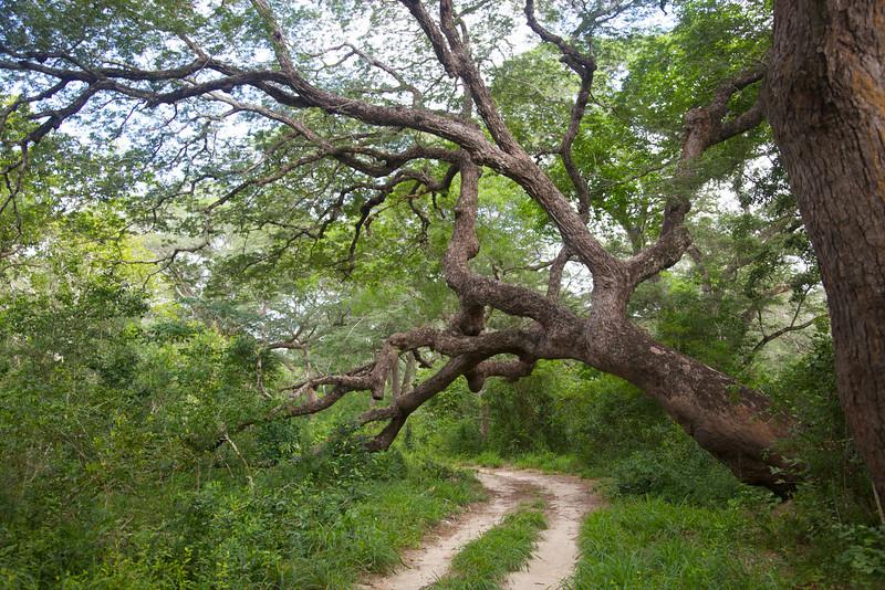 Arabuko-Sakoke National Forest
