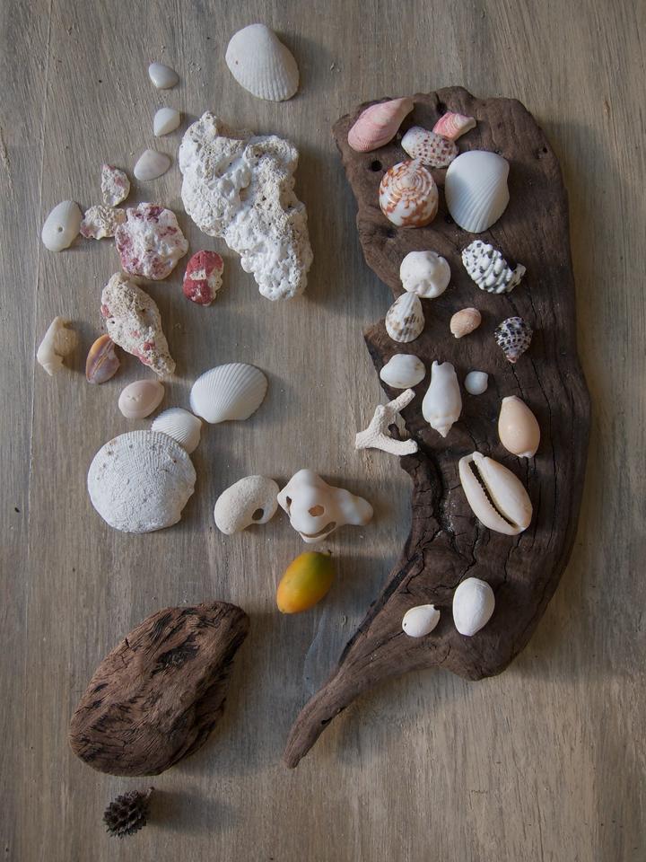Beach bounty