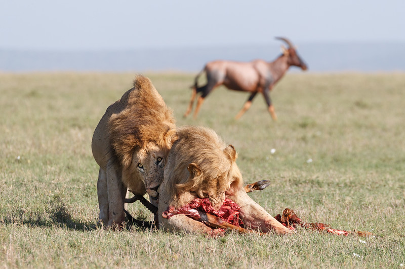 Squabbling over the carcass