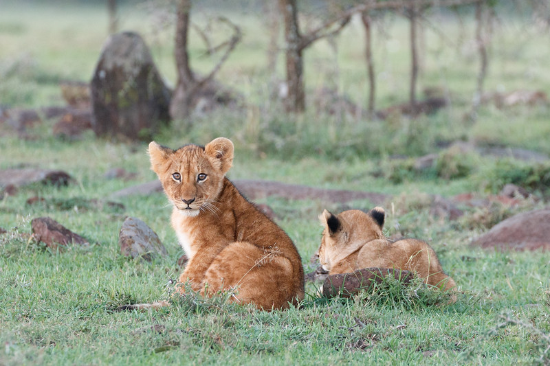 These two cubs had become separated from their mother