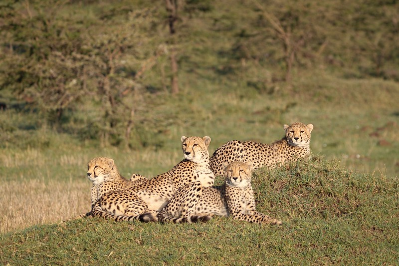 The third cub joined them