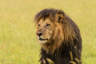 Kenya - Masaai Mara 2016