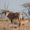 "Our third of the Samburu ""special five""."