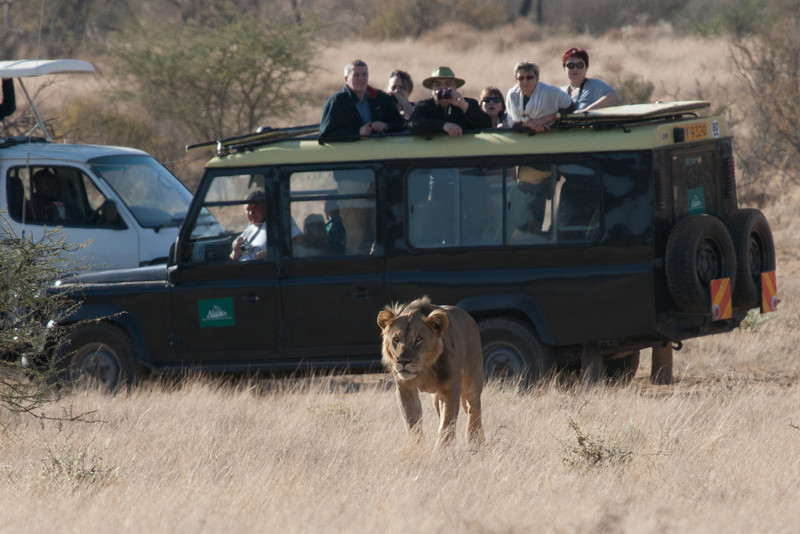 The animals paid little attention to the jeeps full of tourists. Thankfully, in Samburu, we had a jeep, a driver, and a guide all to ourselves.
