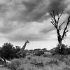 Arbre • Tree