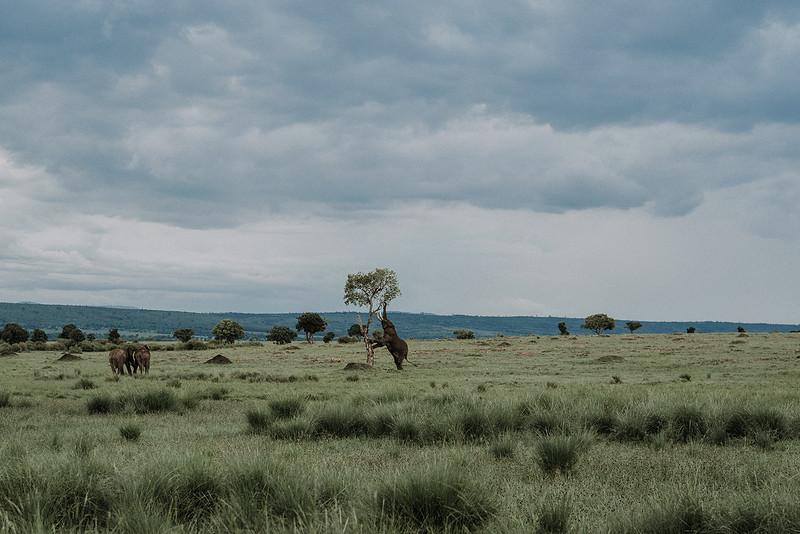 Elopement in Masai Mara, Kenya