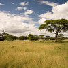 View of savanna, Tarangire National Park, Tanzania.