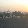 Pictures didn't do justice to the sunset elephant walk ...what a sight !